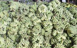 Den gröna bananen i Thailand Arkivbild
