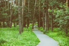 Den gröna barnforsen har fullvuxet på sprucket torrt land, solnedgångsommar grön skog för sommar, löparbana i mitt av arkivfoto