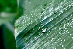 Den gröna bladmakroen, gröna nya växter stänger sig upp för bakgrund Royaltyfria Foton