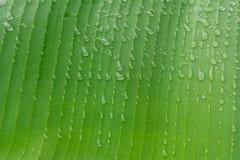 Den gröna bladmakroen, gröna nya växter stänger sig upp för bakgrund Arkivbilder