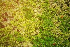 Den gröna blomman och gräsplan spricker ut i naturen för bakgrund Naturbegrepp med tomt område för text mening kopplat av i natur arkivbilder