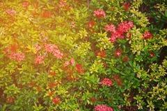 Den gröna blomman och gräsplan spricker ut i naturen för bakgrund Naturbegrepp med tomt område för text mening kopplat av i natur royaltyfria foton