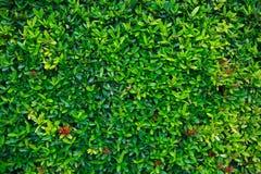 Den gröna blomman och gräsplan spricker ut i naturen för bakgrund Naturbegrepp med tomt område för text mening kopplat av i natur royaltyfria bilder