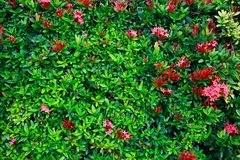 Den gröna blomman och gräsplan spricker ut i naturen för bakgrund Naturbegrepp med tomt område för text mening kopplat av i natur royaltyfri fotografi