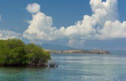 Den gröna busken växer höger i rent havsvatten och i avståndet Arkivbilder