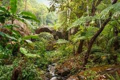 Den gröna djungeln av den Koh Chang ön, Thailand Fotografering för Bildbyråer