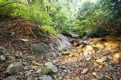 Den gröna djungeln av den Koh Chang ön, Thailand Royaltyfri Foto