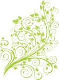 den gröna fjädern fattar Arkivbilder