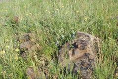 Den gröna gläntan med vaggar och blommande vegetation i lös natur Arkivbild