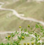 Den gröna granatäpplet bor på höglands- område royaltyfri foto