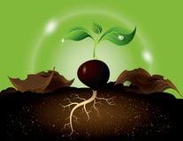 Den gröna grodden som växer från, kärnar ur Royaltyfria Foton