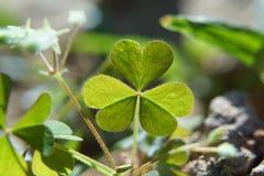 Den gröna hjärtan royaltyfri fotografi