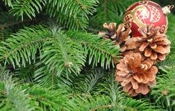 Den gröna julgranen med den röda bollen och sörjer kotten Royaltyfria Bilder