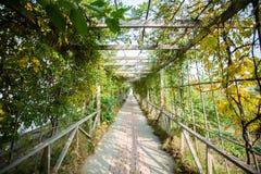 Den gröna kanalen Arkivfoton