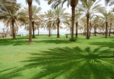 Den gröna lawn- och palmträdskuggan royaltyfri fotografi