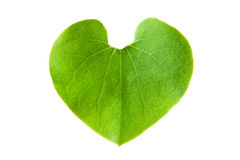 Den gröna leafen formar in av hjärta Arkivbild