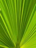 den gröna leafen gömma i handflatan Royaltyfria Bilder