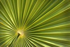 den gröna leafen gömma i handflatan Fotografering för Bildbyråer