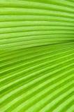 den gröna leafen gömma i handflatan Royaltyfri Bild