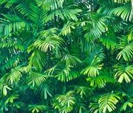 den gröna leafen gömma i handflatan Arkivbild