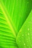 den gröna leafen gömma i handflatan Royaltyfria Foton