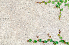Den gröna leafen med sanden texturerar Royaltyfri Foto