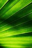 Den gröna leafen texturerar Arkivbild