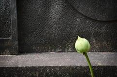 Den gröna lotusblomman Royaltyfria Foton