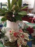 Den gröna magnolian förgrena sig i vas Arkivfoton