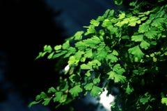 Den gröna naturen lämnar bakgrund arkivfoton