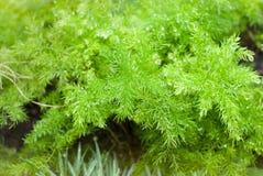 Den gröna ormbunken beror på den härliga naturen Royaltyfri Fotografi