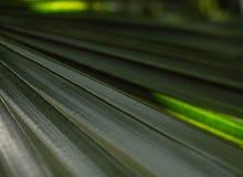 Den gröna palmträdet lämnar med panelljuset som skiner till och med texturen royaltyfri bild
