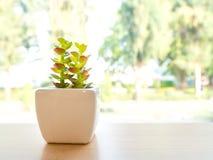 Den gröna plast- kaktuns är i en vit kruka Pålagt en trätabell framdelen av fönstret Fotografering för Bildbyråer