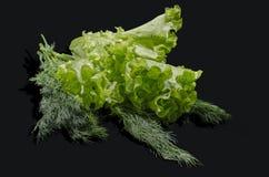 Den gröna salladen och fänkålen Arkivfoto