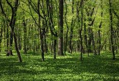 Den gröna skogen arkivfoto