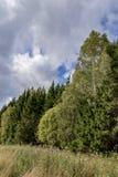 Den gröna sommaren landskap arkivbild