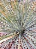 Den gröna sotolväxten/taggar blommar arkivfoto