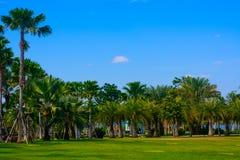 Den gröna staden parkerar Royaltyfria Bilder