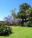 Den gröna staden parkerar för vilar Rosedal Puerto Madero på skymning Royaltyfria Foton