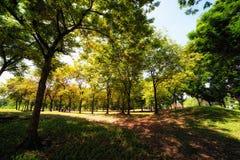 Den gröna staden parkerar i solig sommardag Arkivfoto