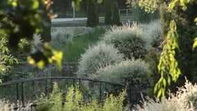 Den gröna staden parkerar, Urban Forest Tree Landscape arkivfilmer