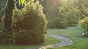 Den gröna staden parkerar, Urban Forest Tree Landscape lager videofilmer