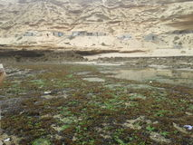 Den gröna stranden vaggar naturfisken Royaltyfri Bild