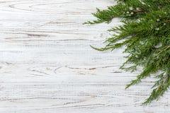 Den gröna thujaen förgrena sig på lantlig träbakgrund royaltyfria foton