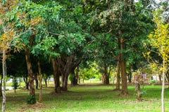 Den gröna trädgården och träd parkerar offentligt Arkivbilder
