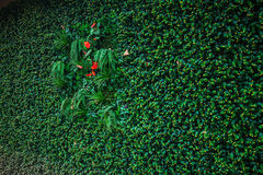 Den gröna väggen planterar isoleringsbakgrundsdetaljen för ECO och modern trähusteknologi Arkivbild