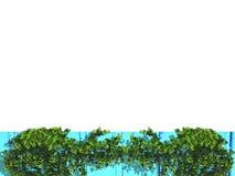 Den gröna växten är på blått trä Royaltyfri Foto