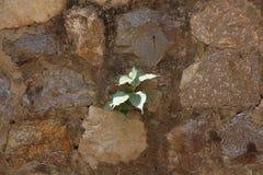 Den gröna växten i hårt vaggar royaltyfria foton