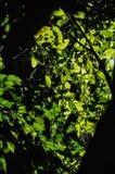 Den gröna växten lämnar Arkivbild