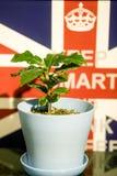 Den gröna växten på skrivbordet Fotografering för Bildbyråer